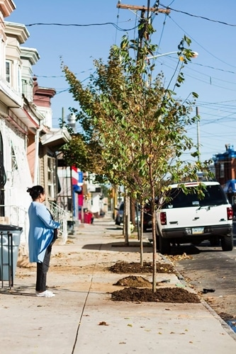 NJ Tree Foundation is changing New Jersey streets one tree at a time.